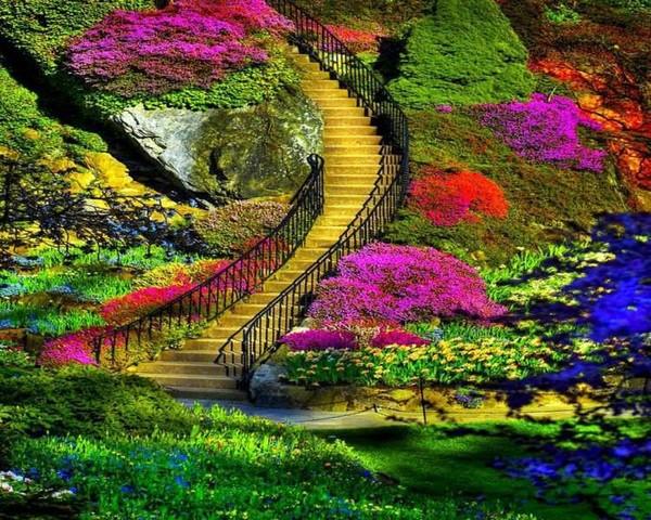 beau jardin fleuri..